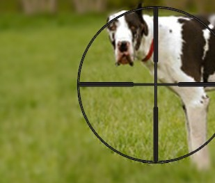 They shoot dogs don't they?