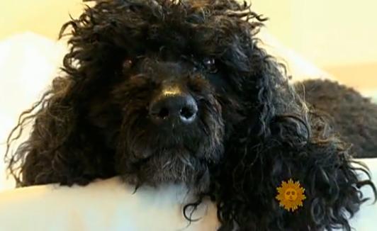 CBS Sunday Morning – Pet custody battles heat up