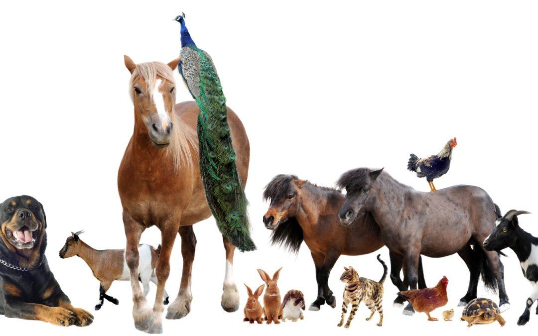 Mediation Practice Helps Resolve Conflicts Between People Over Animals